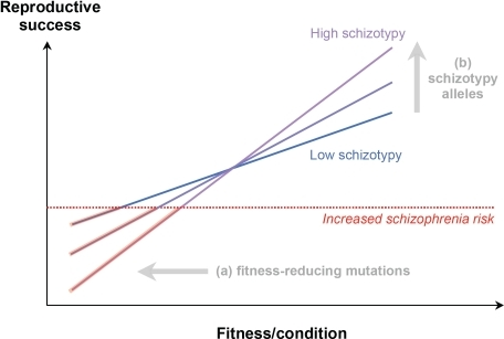 The logic of the sexual selection model (SSM) of schizophrenia and schizotypy.In the SSM, schizotypy enhances the sensitivity of a fitness indicator, by affecting brain processes so as to increase verbal/artistic creativity and other mating-related traits. As a result, schizotypal individuals enjoy higher mating and reproductive success when their genetic fitness is high, but suffer a higher risk of schizophrenia and reduced reproductive success when their genetic fitness is low. The figure shows two classes of genetic factors contributing to increased risk of schizophrenia: (a) fitness-reducing mutations and (b) schizotypy-increasing alleles.