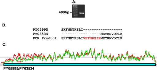 PCR amplification of a py235 gene fragment spanning two contigs,                            PY05995 and PY03534.(A) A single PCR product of 392bp was obtained using a forward primer                            designed on DNA sequences from within the last 200 nucleotides of the                            3′ coding sequence of PY05995 and a reverse primer from within the                            first 200 nucleotides of the 5′ coding sequence of PY03534. (B)                            Alignment of part of the amino acid sequence translated from the                            directly sequenced PCR product with the relevant PY05995 and PY03534                            amino acid sequences (obtained from the NCBI database). The PCR product                            sequence aligned perfectly with that of the two contigs and filled a 24                            nucleotide gap coding for the eight amino acid residues indicated in                            red. (C) Confirmation of PY05995 and PY03534 concatenation by RNA-Seq.                            The two sequences were linked in the RNA-Seq data by 153 read pairs that                            mapped to the end of PY05995, and the beginning of PY03534. The graphs                            present the expression in the WT (green) and PY01365-KO (red) parasite                            lines. The two red diamonds joined by a line indicates the position of                            the qPCR primers.