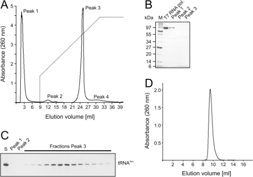 Non-denaturing RNA purification.(A) Elution profile of in vitro transcribed mouse tRNASec from a MonoQ column. Peak 1 – unincorporated rNTPs, T7 RNA polymerase and other proteins; Peak 2 – abortive synthesis transcripts; Peak 3 – desired RNA sample; Peak 4 – aggregates or higher molecular weight nucleic acids. The gradient (buffer B from 30 to 100%) is shown as a dashed line. (B) Denaturing SDS PAGE analysis of peak fractions from Peaks 1–3. T7 RNA polymerase and molecular weight markers (M) were loaded as references. Protein bands were stained with Coomassie. (C) Denaturing urea PAGE analysis of peak fractions eluted from the MonoQ column. S – crude transcription extract. RNA bands were stained with methylene blue. (D) Elution profile of mouse tRNASec from a Superdex 75 10/300 GL column.