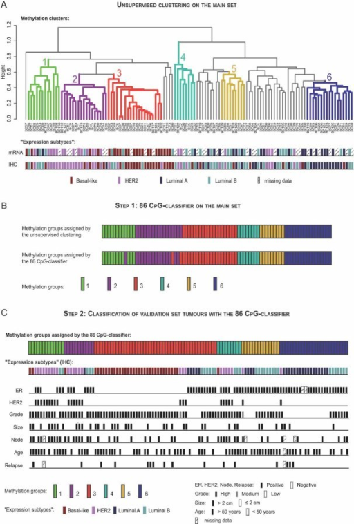 Complexity and heterogeneity of breast cancers as revealed by DNA methylation: a meaningful basis for refining breast tumour taxonomyDNA methylation profiling of the main set identifies six groups of tumours, termed clusters 1–6, displaying differences in terms of 'expression subtype composition' and clinical characteristics (see also Fig S6 and Table SX of Supporting Information).Comparison of the methylation group assigned to each tumour of the main set by the unsupervised cluster analysis and the 86 CpG-classifier established by the nearest centroid classification method (Lusa et al, 2007; Sorlie et al, 2003; see also Fig S8 and Table SXIV of Supporting Information).Classification of each tumour of the validation set into one of the six methylation groups by means of the 86 CpG-classifier (see also Fig S9 and Table SXVI of Supporting Information). Note that the 6 groups obtained for the validation set presented the same 'expression subtype composition' and clinical characteristics as the groups obtained for the main set (see also Fig S10 and Table SXVII of Supporting Information).