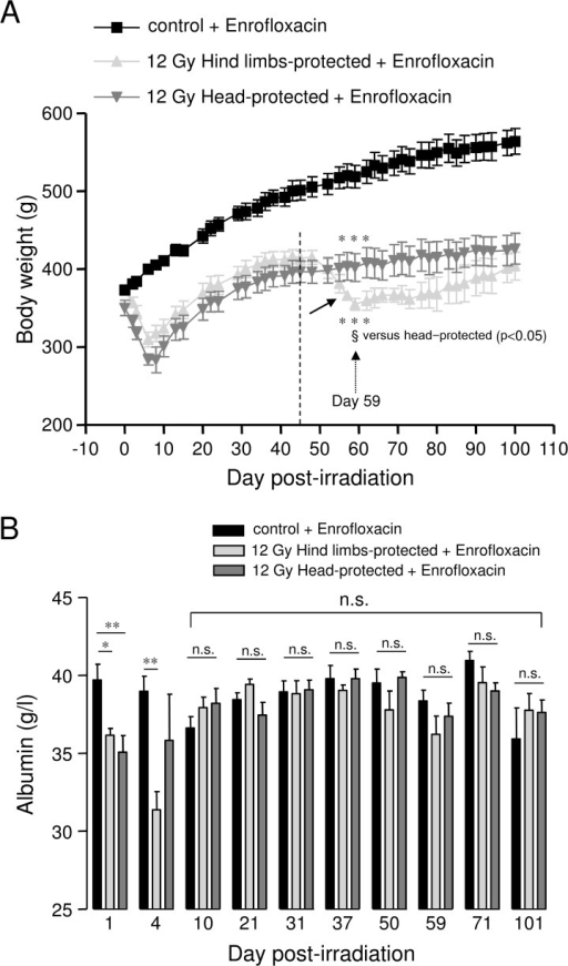 Evolution of body weight and plasma albumin levels in 12 Gy-irradiated rats with hind limbs or head protection.A: Body weight evolution for controls (5 rats) and 12 Gy-irradiated rats with either hind limbs (5 rats) or head protected (4 rats). All rats received antibiotic support (Enrofloxacin). Measurements of body weight were performed every 2–3 days. The arrow on the graph indicates late average body weight loss for hind limbs-protected rats. The evolution of body weight is represented for rat groups euthanized 101 days after irradiation. The same body weight evolution was observed for all groups of hind limbs-, head-protected and control rats euthanized earlier after irradiation. (*** (p0.001) significant versus control + enrofloxacin; § (p<0.05): significant versus head-protected). B: Kinetic analysis of plasma albumin levels in 12 Gy-irradiated rats with hind limbs or head protection. Plasma albumin levels were measured using a Hitachi 912 automatic analyser. For each day post-irradiation (1, 4, 10, 21, 31, 37, 50, 59, 71, 101), data represent average values obtained from the plasma of 4–5 hind limbs-protected rats, 4–5 head-protected rats and 5 age-matched control rats from the same batch. All animals were treated with Enrofloxacin. (** (p<0.01); * (p<0.05); n.s.: not significant).