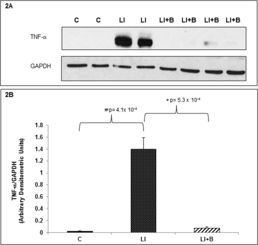 Baclofen inhibits pulmonary TNF-α expression in lung injured animals.(A) Lung tissue homogenates from control, LI and LI+B treated animals were immunoblotted with anti-TNF-α and anti-GADH antisera. GAPDH was used as an internal control. Four animals per group were used. (B) Densitometric units of TNF-α for all 4 animals/per group were normalized to their corresponding GAPDH densitometric units. The data was averaged, analyzed and quantitated.