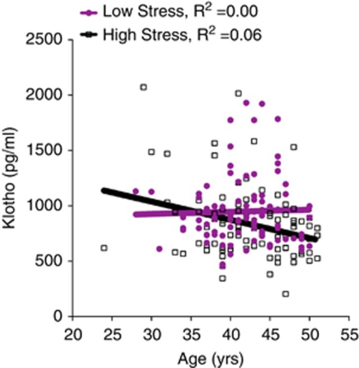 Klotho levels show age-related decline in young women under high, chronic stress. Klotho levels decreased with increasing age in chronic, high-stress caregivers (linear regression B=−0.26, P=0.014; R2=0.06), but not low-stress women (B=0.01, P=0.934; R2=0.00). This association remained significant after accounting for body mass index (BMI; B=−0.26, P=0.016; ΔR2=0.05). Analyses were carried out on log10-transformed klotho values.