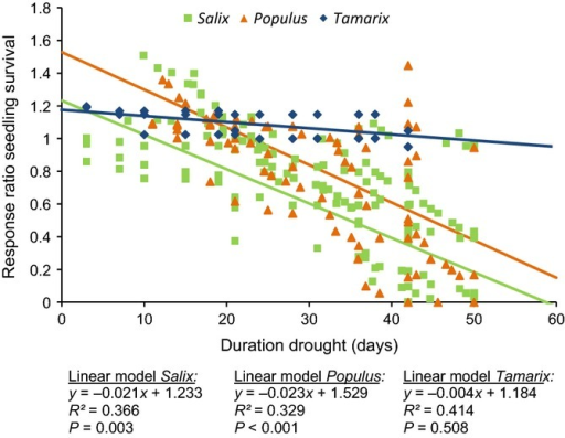 Effects of duration of drought on seedling survival (mean number of seedlings treatment/seedlings control) of the genera Populus, Salix and Tamarix. All data points related to each genus are indicated. Weighted regression analyses are shown. n = 261 from five studies.