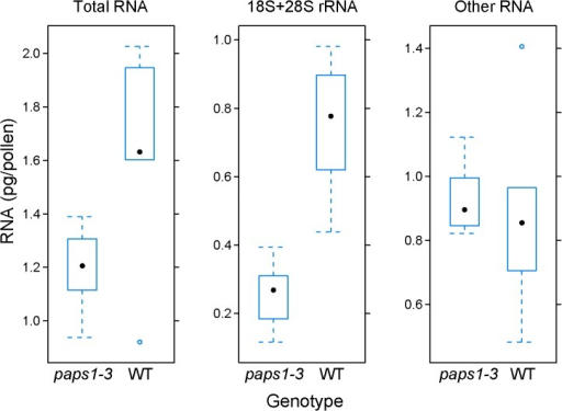 Role of PAPS1 in ribosome biogenesis.Quantification of total RNA (left), combined 18S and 28S rRNA (middle), and remaining non-ribosomal RNA (right) in pg per pollen grain from paps1-3 mutant and PAPS1 pLat52::DsRED wild-type pollen grains produced by paps1-3—/ PAPS1 pLat52::DsRED transheterozygous plants. Pollen grains were flow-sorted based on DsRED fluorescence and extracted total RNA was subjected to Bioanalyzer quantification. RNA amounts were related to the known number of pollen grains in the sorted fractions. Values represent five biological replicates; black dot is the median value, open blue circles show outliers as determined using the R/lattice boxplot.stats function.