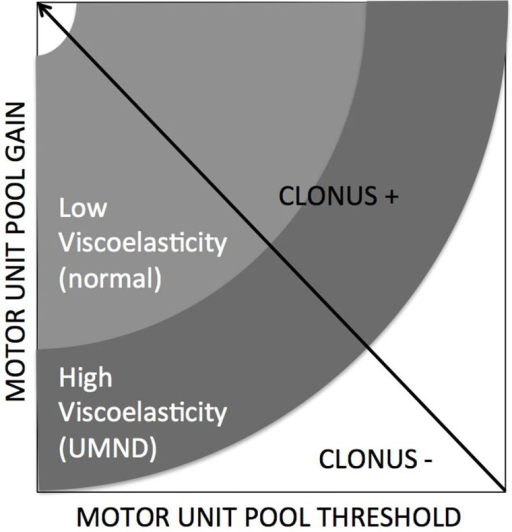 Clonus is emerging when specific conditions are met, being combinations of neural factors (gain and threshold) and altered/increased tissue viscoelasticity (de Vlugt et al., 2012).