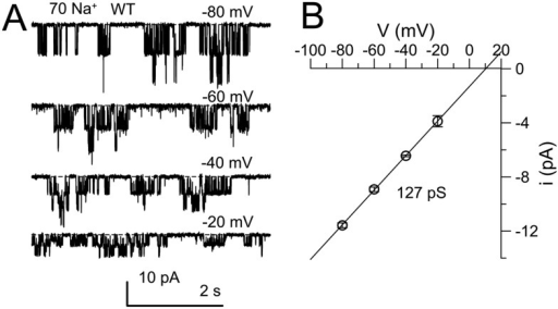 Confirmation of properties of single KNa channels that are deleted by Slo2 dKO.(A) The cytosolic face of an excised inside-out patch from a DRG neuron was exposed to 70 mM Na+ solution and channel activity was monitored over a range of voltages. Average activity exhibited only weak voltage-dependence. (B) Single channel amplitude was measured at four voltages for a set of four patches, yielding a single channel conductance of 127 pS.DOI:http://dx.doi.org/10.7554/eLife.10013.014