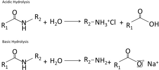 Acidic and Basic Hydrolysis of Proteins, adapted from [30,229].