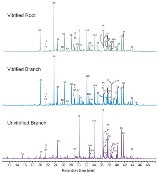 Comparison of thermochemolysis-GC-MS data for vitrified root and branch tissue and unvitrified branch tissue, illustrating differences in the distributions of the products observed.