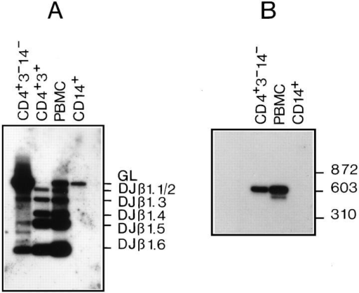 Detection of partial (D–J) rearrangements of the TCR-β locus. (A) At DNA level. Genomic DNA was isolated from sorted  CD4+CD3−CD14−, CD4+CD3+, CD14+, and total PBMC and amplified by PCR using TBF1 and TBR1 primers to detect Dβ1–Jβ1 rearrangements. Normal PBMC and monocytes (CD14+) were used as positive and negative controls, respectively. PCR products were blotted and  hybridized with TBR3 probe. PCR products, ranging from 200 to 3,000  bp, and the Jβ segment used are indicated. GL, germline. (B) At RNA  level. Total RNA was first isolated from sorted CD4+CD3−CD14−,  CD14+, and from total PBMC and, subsequently, RT–PCR using TBF1  and Cβ primer set was performed. PCR products were blotted and  probed with a Cβ-specific primer.