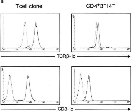 (A) CD3-γ, CD3-ε,  and CD3-δ transcripts are expressed in pTα+ cells. RT–PCR  analysis with primers specific for  three components (γ, ε, and δ)  of the CD3 signaling molecule  was performed on CD4+  CD3−CD14− cell population.  The T cell line MOLT4 and water were used as positive and  negative controls, respectively.  (B) CD3-ε molecule, but not  TCR β chain, is present in the  cytoplasm of pTα+ cells. Cytoplasmic staining was performed  with a TCR-β–specific (top right  and left) or a CD3-ε–specific (bottom right and left) mAbs on a T  cell clone (right top and bottom)  and on CD4+CD3−CD14−  sorted PBMC (left top and bottom). In the case of TCR-β cytoplasmic staining, mouse anti– human IgG1 was subsequently  used. Dotted histogram lines  represent negative controls that  were the following: for β-cytoplasmic, mouse anti–human  IgG1 alone and for CD3-cytoplasmic, CD20–FITC.