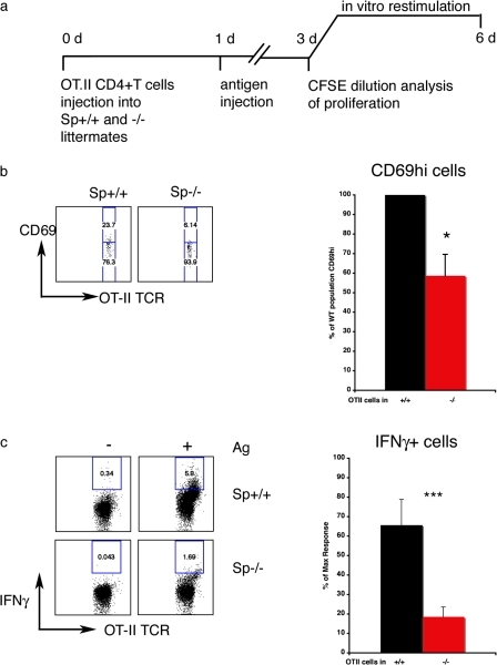 Spinophilin plays a functional role in antigen presentation in vivo. (a) Protocol: CD4+ T cells were isolated form TCR-transgenic mice (OT-II) and labeled with CFSE. 106 labeled cells were injected i.v. into WT and KO littermates. 1 d later, animals were injected i.v. with 10 μg ovalbumin + 100 ng LPS or LPS alone. On day three, spleen cells from WT and KO mice were isolated and analyzed for proliferation as measured by CFSE dilution or restimulated with ovalbumin (0, 10, and 20 μg/ml) for an additional 3 d. Intracellular cytokine staining was then performed. (b) The CD69hi population of adoptively transferred T cells was smaller in spinophilin KO (red) than in spinophilin WT (black) mice. Representative flow cytometry plots (left) and the data pooled from four independent experiments (right) is shown (n = 14 WT and 15 KO mice total; *, P < 0.05 by Student's t test). (c) The relative abundance of IFNγ-producing effector T cells was significantly greater in WT than in KO, as measured by flow cytometry of intracellular cytokine staining. (left) Representative flow cytometry plots. (right) Data pooled from three independent experiments (n = 8 animals total for WT and KO; ***, P < 0.001 by Student's t test).