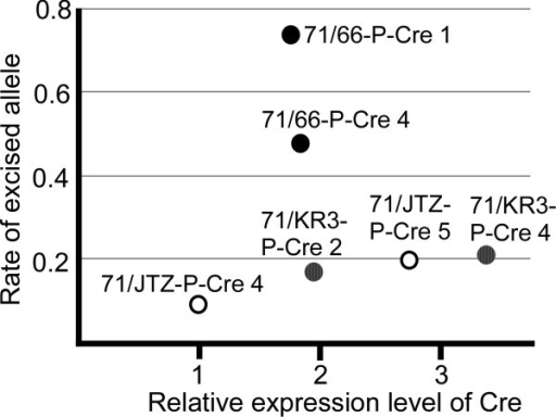 Relation of excision and Cre expression level. The northern blot X-ray film of Figure 6b was subjected to densitometry; the average of band intensities of samples from the 1st, 7th, and 11th passages were calculated; and the relative band intensity to 71/JTX-P-Cre 4, which showed the lowest expression, was calculated and plotted on the x-axis. The highest value of the excised allele rate calculated in Figure 7c was plotted on the y-axis. In 71/66-P-Cre clones, the recombination rate was apparently higher than in other clones.