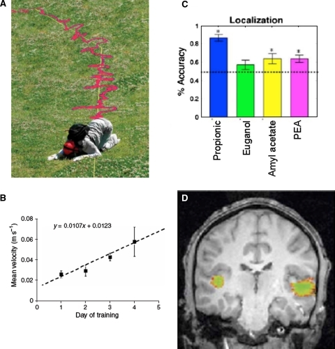 No space for human olfactory attention. a Results from Porter et al. (2007). Humans have good allocentric olfactory abilities, and can follow a scent trail. b Scent-trail tracking speed increases with each of 4 days of practice. c Results from Porter et al. (2005). Humans have poor egocentric olfactory abilities, and are only marginally but significantly above chance at localizing the pure olfactant PEA to either the left or right of the nose. Note significantly better performance for propionic acid that has a significant trigeminal component. D. Brain mechanisms involved in extracting spatial information from smell, including the superior temporal gyrus