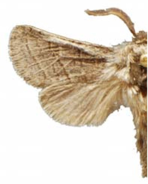 Figure 3:Edible Lepidoptera in Mexico: Geographic