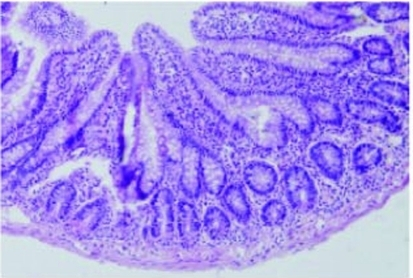 Normal intestinal mucosa in the S group rats (Grade 0) (H&E, 100).