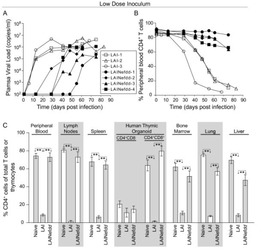 Analysis of BLT humanized mice inoculated with a low dose ofnef(−) or wild-type LAI. (A) Each line depicts longitudinal plasma viral load data from individual BLT humanized mice infected with 3000 TCIU of LAINefdd (closed symbols) or LAI (open symbols). These data demonstrate delayed replication of LAINefdd relative to LAI following low dose inoculation. (B) Each line depicts the percentage of CD4+ T cells in peripheral blood over time where each animal's symbol is matched to the mice in (A). Mice infected with a low dose of LAINefdd showed minimal changes in CD4+ T cell percentages when compared to BLT humanized mice inoculated with an equal dose of LAI. (C) Naïve BLT humanized mice (n = 5 in PB, spleen and HTO or n = 4 in LN, BM, lung and liver) and BLT humanized mice inoculated with 3000 TCIU of LAINefdd (n = 4) exhibited similar levels of CD4+ cells while mice inoculated with the same dose of LAI (n = 3) exhibited a drastic reduction in these cells. Shown are the percentages of human CD4+ T cells present in peripheral blood, lymph nodes, spleen, bone marrow, lung and liver, as well as the percentages of CD4+CD8- and CD4+CD8+ thymocytes in the human thymic organoid. The percent of CD4+ T cells in peripheral blood or tissues was relative to total CD3+ T cells while the percent of CD4+CD8- and CD4+CD8+ thymocytes was relative to total thymocytes. One-way ANOVA with three Bonferroni multiple comparisons tests was performed to compare the results within each tissue. If no difference was detected, the comparison is unmarked (alpha = 0.05). Comparisons yielding significant differences are represented by a line connecting the arrows above the respective bars (**p < 0.01).