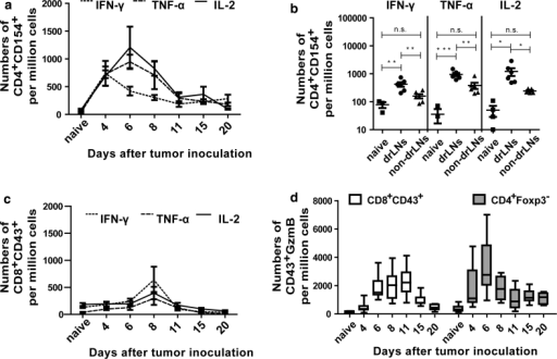 Cytokines and functional properties of T cells: B6 mice were inoculated s.c. with 1 × 107 FBL-3 cells. At different time points ptc, lymphocytes from lymph nodes were isolated and investigated. Kinetics of IFN-γ-, TNF-α-, and IL-2 expressing CD154+CD4+ (a) and CD43+CD8+ (c) T cells from lymph nodes are shown. b Numbers of cytokine producing CD4+CD154+ T cells at day 6 ptc are depicted. Each dot represents an individual mouse and the means are indicated by a line. d Intracellular expression of GzmB. Numbers of CD8+CD43+ (white box plots) and CD4+Foxp3− (grey box plots) T cells producing GzmB are shown in drLNs at different days ptc. Differences between two groups are indicated (*P < 0.05, **P < 0.005, ***P < 0.0005). All experiments were repeated three times with comparable results