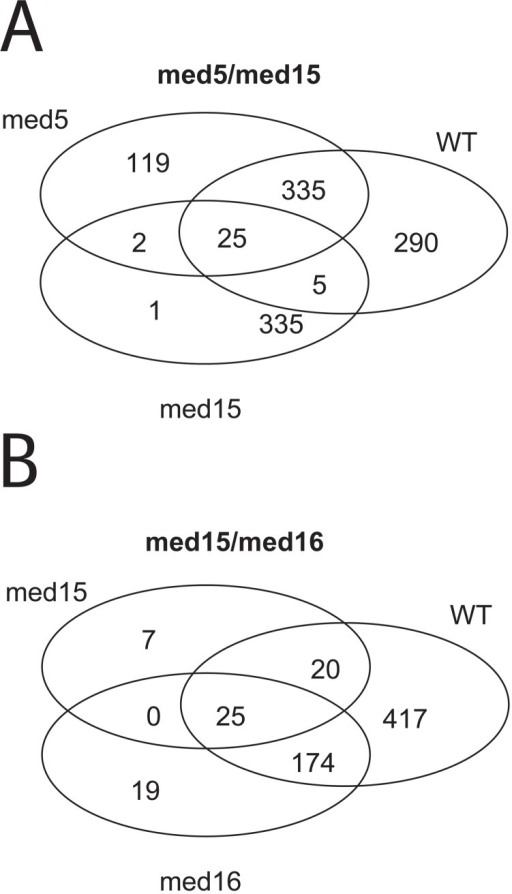 Transcription profile analysis using AffymetrixsYeast Genome 2.0 Array.25 genes were differently regulated in both of the double-Degron strains (med5/med15 (A) and med15/med16 (B)), 45 minutes after induction of degradation, compared to the single Degron (med5, med15 and med16) and wild type (Wt) strains, as shown in the Venn diagrams (FDR<0.05 and FC>abs(log2(1.5)).