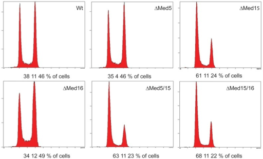 Flow cytometry analyses of Degron constructs.DNA content of cells carrying the indicated Degron constructs was analyzed by flow cytometry at 3 hours after switching from the permissive to the restrictive growth conditions. Numbers below each histogram indicate the percentage of cells in the G1-, the S-, and the G2+M-phases, respectively.