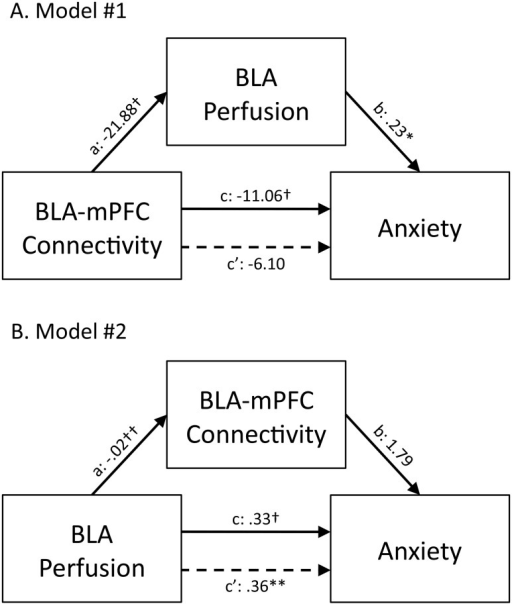 BLA perfusion mediates the relationship between BLA-mPFC connectivity and anxiety levels.Mediation analyses revealed that BLA perfusion levels mediate the relationship between BLA-mPFC connectivity and anxiety (A: Model #1). In contrast, BLA-mPFC connectivity did not mediate the relationship between BLA perfusion levels and anxiety (B: Model #2). Values are unstandardized regression coefficients reflecting the direct (paths a, b, and c') and total (path c) effects of each relationship in the mediation model. BLA, basolateral amygdala; mPFC, medial prefrontal cortex; *p<.05, **p<.01, †p<.001, ††p<.0001.