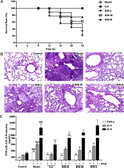Effect of RM on lung infection induced by theP. aeruginosaPAK strain.(A) The survival rate of mice treated with RM or Cef upon challenge with P. aeruginosa. The survival rate was assessed for 24 h; (B) lung tissue pathology slices (the light microscopic images were captured at 100× magnification); (Control) control group, (Model) model group, (Cef) positive control group, (RM-H) high dose RM group, (RM-M) middle dose RM group,(RM-L) low dose RM group. Comparing with the control group, obvious inflammatory cell infiltration in mucosa and submucosa in model group; (C) effects of RM on the production of TNF-α, IL-6, IL-8 in mouse serum.Value were expressed as the mean ± SEM (n = 6). *p < 0.05, **p < 0.01,***p<0.001, compared to the model group (,). ###p<0.001 compared to the control group.