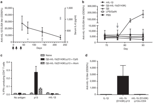 Safety assessment of the Qβ-mIL-1b(D143K) vaccine in mice. (a) Time course of anti-IL-1β antibody responses. Female C57BL/6 mice (n = 4) were immunized s.c. on days 0, 14, and 35 (arrows) with 1 µg of Qβ-mIL-1b(D143K). On days 42, 70, 140, and 228, mice were challenged with i.p. injections of 1 µg wild-type mouse IL-1β. Three hours after challenge, sera were collected, and IL-6 levels were quantified by ELISA. Single data points (filled gray circles) represent individual animals. Antimouse IL-1β (wild type) IgG antibody titers were determined at the same time points by ELISA and are represented as group means ± SEM (black triangles). (b) Effect of increased IL-1β levels on antimouse IL-1β IgG antibody titers. Groups of female C57BL/6 mice (n = 5) were immunized s.c. on day 0 with 50 µg Qβ-mIL-1b(D143K). On day 76, mice received either an i.v. injection of 100 ng wild-type mouse IL-1β (in 100 µl PBS), an i.p. injection of a mixture of 1 ng Escherichia coli lipopolysaccharide, and 20 mg N-galactosamine (Sigma-Aldrich), or a s.c. injection of 50 µg Qβ-mIL-1b(D143K). Control groups received either an i.v. injection of 100 µl PBS or a s.c. injection of 50 µg Qβ VLPs. Mice were bled on days 69, 76, 83, and 90 and mouse IL-1β (wild type)-specific IgG antibody titers were determined by ELISA. Shown are group means ± SEM. (c) Measurement of IL-1β-specific T cell responses after vaccination with Qβ-mIL-1b(D143K). Groups of mice were immunized with Qβ-mIL-1b(D143K)-p13 in the presence of CpG or Alum, respectively, as described in Materials and Methods. One group of female C57BL/6 mice was kept naive. After immunization, splenocytes were isolated from all mice and stimulated with BMDC that had been loaded either with synthetic p13 peptide or with wild-type mouse IL-1β. Nonspecific IFNγ-release from CD4+ T cells was determined by incubation of splenocytes with mock-pulsed BMDC (no antigen). Antigen-specific IFNγ-producing CD4+ T cells were determined by fluorescence-activated cell sorting. Shown are group means ± SEM. (d) Th cell dependence of anti-IL-1β antibody induction. Groups of mice received s.c. injections of either wild-type mouse IL-1β or mIL-1b(D143K)-p13, each in the presence of incomplete Freund's adjuvant. A subgroup of mIL-1b(D143K)-p13-immunized mice were additionally injected with a depleting anti-CD4 antibody. Mouse IL-1β (wild type)-specific IgG antibody titers were analyzed by ELISA. Shown are group means ± SEM.