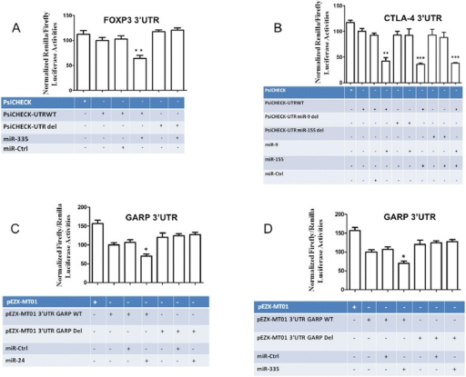 MicroRNA specific activities. (A) MiR-335 negatively regulates luciferase expression in a plasmid coupling its coding sequence with FOXP3 3′UTR. Renilla luciferase reporter assays with constructs holding FOXP3 3′-UTR sequences from the indicated genes were co-transfected into HEK293T cells along with a firefly luciferase transfection control plasmid either alone or together with miR-335. (B) MiR-9 and miR-155 negatively regulate luciferase expression in a plasmid coupling its coding sequence with CTLA-4 3′UTR. Renilla luciferase reporter assays with constructs holding CTLA-4 3′-UTR sequences, wild type or miR-site deleted, were co-transfected into HEK293T cells along with a firefly luciferase transfection control plasmid either alone or together with miR-9, −155. MiR-24 (C) and miR-335 (D) specifically targets GARP 3′UTR and negatively regulate luciferase reporter expression. Renilla and firefly luciferase reporter assays with constructs holding GARP 3′-UTR sequences, wild type or miR-site deleted, were co-transfected into HEK293T cells along with miR-24, −335. Relative luciferase values normalized to transfections without miRNA are shown. Data represent mean ± SD (error bars) of three independent experiments, each performed in triplicate. (*p < 0.05; **, p < 0.01, Student's t test).