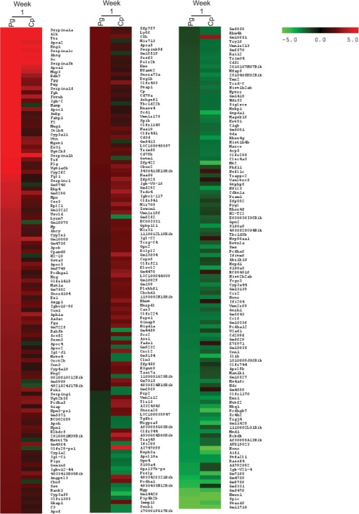 Genes upregulated and downregulated at week 1 in ApoE-/- mice with bacterial infection.Heatmap shows the transcripts identified through microarray as upregulated or downregulated 2-fold or more with either P. gingivalis (Pg) or C. pneumoniae (Cp) infection compared to Untreated Control in the ApoE-/- mice. Each condition represents RNA from 3 mice pooled.