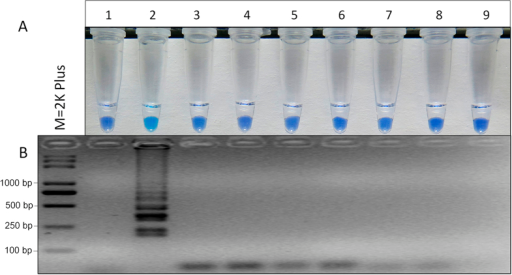 Specificity of LAMP detection of the E198A mutant in S. sclerotiorum. Assessment was based on (A) HNB visualization of color change or (B) gel electrophoresis analysis of the LAMP products. M, 2K plus; 1, wild type of S. sclerotiorum; 2, E198A genotype of S. sclerotiorum; 3, F200Y genotype of S. sclerotiorum; 4, E198K genotype of F. graminearum; 5, E198L genotype of F. graminearum; 6, E198V genotype of B. cinerea; 7, E198A genotype of B. cinerea; 8, E198K genotype of B. cinerea; 9, ddH2O.