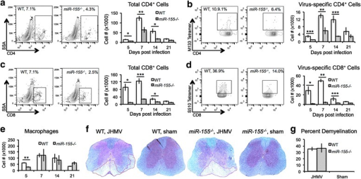 JHMV-infected miR-155−/− mice demonstrated reduced CNS T cell infiltration. WT and miR-155−/− mice were infected i.c. with JHMV (200 PFU). Mice from each group were sacrificed 5, 7, 14, and 21 days p.i., and brains were collected. Flow analysis indicated reduced infiltration of total CD4+ T cells (a) and CD8+ T cells (c), as well as reduced virus-specific CD4+ T cells (b) and CD8+ T cells (d), as determined by tetramer staining [95, 96]. In contrast, while macrophage (CD45 + F4/80hi) infiltration into the CNS was lower in miR-155−/− mice at 5 days p.i. (e), the levels were similar at later time points. Representative spinal cords from JHMV-infected and sham-infected mice stained with LFB at day 14 p.i. showed similar levels of demyelination between infected WT mice (35.1 + 4.9 %, n = 4) and miR-155−/− mice (36.7 + 4.3, n = 4) whereas no demyelination is observed in sham-infected animals (f, g). Data presented are derived from two independent experiments with a minimum of four mice/experimental group. Data are presented as average ± SEM. Statistical significance was measured using unpaired, one-tailed Student's T tests; *p < 0.05; **p < 0.01; ***p < 0.001