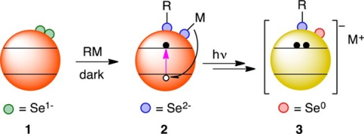 ProposedReduction of Surface Selenium Moieties upon Treatment withOrganometallic Reagents, Followed by Photodoping
