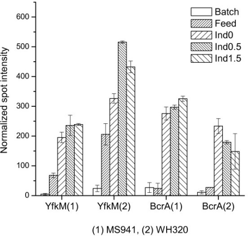 Expression profiles of two cell stress-related proteins. YfkM is a ThiJ/pfpI family protein; BcrA is the ATP-binding cassette of the BcrABC transporter for the transport of the antibiotic bacitracin.