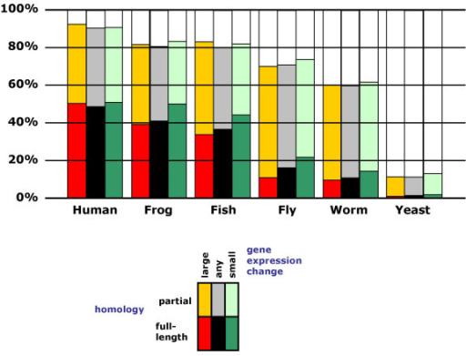 Phylogenetic distribution of proteins associated with probe sets. Percentage of proteins with homologues in a given organism: Homo sapiens (human), Brachydanio rerio (fish), Xenopus laevis (frog), Drosophila melanogaster (fly), Caenorhabditis elegans (worm), and Saccharomyces cerevisiae (yeast). For each organism, the leftmost column indicates homologues found for proteins from the 1,675 probe sets with largest gene expression changes, the middle column those from the complete set of 16,752 probe sets, and the rightmost column those from the 1,675 probe sets with smallest gene expression changes. In each column, the dark bottom part indicates the percentage of proteins aligned along their full length (less than 30 amino acids unmatched at the N- and C-termini of both sequences), and the lighter upper part is the percentage of proteins with sequence similarity (no length restriction). Proteins were considered similar with a BLAST E-value < 1e-6.