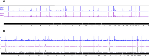 Different hES-MSC replicates show similar alignment peaks. Visualization of Seqmap mapping via UCSC genome browser reveals peaks along specific genomic regions that have large numbers of miRNA binding to these regions. In the top figure A Blue and Purple trend lines represent biological replicates of samples derived from intracellular environment. High degree of correlation is observed between the replicates as can be observed from the similarity in locations where peaks were found. The height of each such peak corresponds to the number of transcripts detected from deep sequencing. Each peak now represents genomic locations where a large number of specific transcripts bind to. The bottom figure B depicts the extra cellular sample transcripts that are aligned to the human genome using Seqmap. Peaks occur in similar region after mapping across the replicates. Each replicate is visualized with a different color and the salient feature reveals peaks from different sample aligning in similar locations.