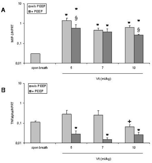 Expression of MIP-2 (A) and TNFα (B) mRNA in the lungs of mice that were ventilated with different tidal volumes without and with application of PEEP. Columns represent mean+SEM of spontaneous breathing (spon breath) mice and ventilation groups. *: P < 0.05 vs spontaneous breathing animals. § P < 0.05 vs + PEEP. +: P < 0.05 vs ventilation with a Vt of 5 ml/kg or 7 ml/kg without PEEP.