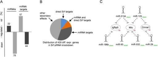 miRNAs and their impact on the Srf-driven transcription network.(A) RNAi knockdown of Srf in HL-1 cardiomyocytes results in 42 differentially expressed miRNAs (49 loci) (Table S10). Target prediction of these mostly downregulated miRNAs revealed 192 differentially expressed genes, with a higher fraction of upregulated genes (57% of all upregulated genes) compared to downregulated genes (44% of all downregulated genes). (B) Direct Srf targets represent only a small fraction of all differentially expressed genes in Srf knockdown (orange and blue). Targets of differentially expressed miRNAs impact 45% (dark grey) with a partial overlap of direct Srf targets (orange). Approximately 50% of differential expression is driven by other secondary effects (light grey). (C) Exemplary network of indirect gene regulation by miRNAs. The genes Igfbp5, Nfic and Ctnnal1, which are not directly bound by Srf, are predicted targets for a set of downregulated miRNAs and are found to be upregulated in the Srf knockdown.