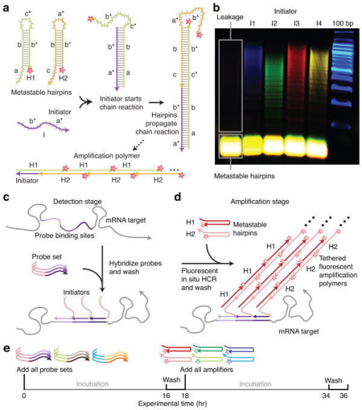 an overview of the benefits of fluorescence in situ hybridisation Fluorescence in situ hybridisation fluorescence in situ our data emphasise the benefits of whole-genome array genetics of autism: overview and new.
