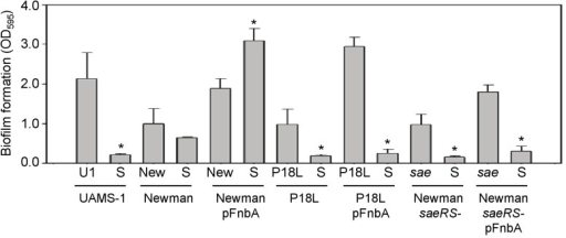 "Impact of saeRS and surface-associated FnbA on biofilm formation in Newman.Surface-anchored FnbA was restored in Newman (New), its saeS-repaired derivative (P18L), and its isogenic saeRS mutant (sae) by introduction of a plasmid-borne copy of fnbA. Biofilm formation was assessed using a microtiter plate assay, with UAMS-1 (U1) and its sarA mutant included as positive and negative controls, respectively. sarA mutants are designated as ""S."" Asterisks indicate statistical significance (p<0.05) by comparison to the isogenic parent strain (WT)."