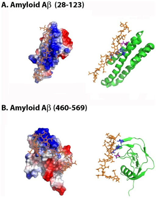 Molecular docking simulation of Aβ28–123 and Aβ460–569 heparin-binding sites.The figure displays the protein electrostatic potential (left) and the protein cartoon highlighting in red the CPC clip motif (right) of (A) Aβ28–123 and (B) Aβ460–569. CPC residues are colored in blue (cationic) and magenta (polar). Heparin dodecasaccharide ligand used in docking simulations is colored in orange. PDB codes: 1MWR (Aβ28–123), 1TKN (Aβ460–569) and 1HPN (heparin ligand).