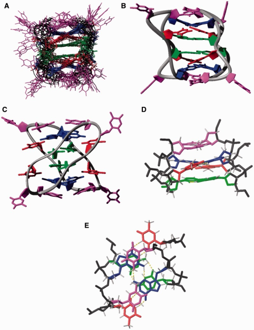 Dimeric structures of d<pTCGTTTCGTT>. Cytosines are shown in green, guanines in blue, thymines involved in GT base pairs in red and unpaired thymines in magenta. Backbone is shown in black. Hydrogen bonds are indicated in yellow. (A) Ensemble of the 10 calculated structures. (B and C) Two views of the overall structure. (D and E) Details of the stacking interaction between C:C+ base pairs, with G:T:G:T minor groove tetrads and capping thymines.
