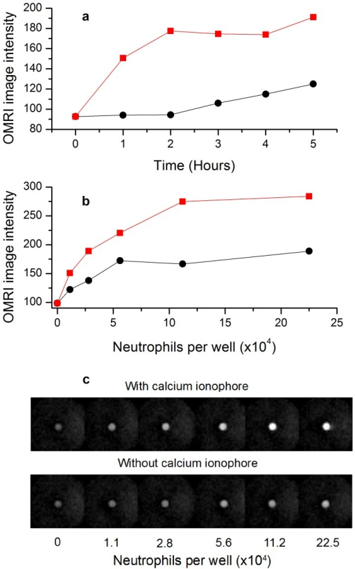 OMRI detection of neutrophil degranulation in the presence of nitroxide-labeled elastin (1 mM equivalent nitroxide concentration).(a) OMRI intensity from 11×104 resting (black circles) or activated (red squares) neutrophils in 0.5 ml versus time of incubation at 37 °C. (b) OMRI intensity at five hours incubation at 37°C versus the number of resting (black circles) or activated (red squares) neutrophils. In (c) the images corresponding to plot (b) are displayed. Gradient Echo (Fast Low Angle SHot) trans-axial images were acquired with the following parameters: TR: 300 ms, TE: 10 ms, RF nutation angle: 70 degrees, Field of View (FOV): 22 mm*22 mm, acquisition matrix: 64*64, in plane resolution: 0.34 mm*0.34 mm, slice thickness: 3 mm, 2 averages. OMRI HF irradiation was applied for 260 ms out of 300 ms TR.