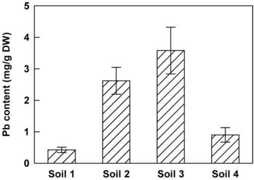 Lead concentration in shoots of H. incana growing on different polluted soils.Seedlings were grown on sterile compost for 20 days and transferred for 2 months on 4 different soils containing various amounts of total lead (soil 1∶6972 mg.kg−1 DW, soil 2∶18626 mg.kg−1 DW, soil 3∶7531 mg.kg−1 DW and soil 4∶1577 mg.kg−1 DW; Table 1). Data are the average (± SE) of three independent measurements.