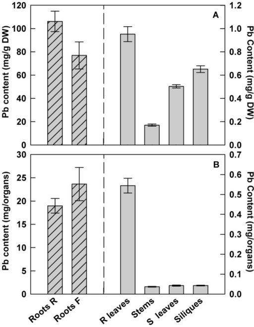 Lead distribution in different parts of H. incana.Lead contents are expressed as (A) mg Pb.g−1 DW or (B) mg Pb.organ−1. Seedlings were grown for 2 months in hydroponic conditions supplied weekly with fresh media containing 100 µM Pb(NO3)2. Roots R = roots at the rosette stage; Roots F = roots at the floral stage; R leaves = rosette leaves; S leaves = stem leaves. Data are the average (± SE) of three independent measurements.