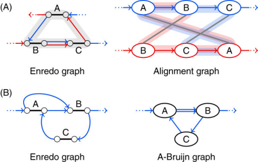 Genome alignment cycles have a one-to-one correspondence only in the structure of Enredo graphs.(A) A cycle in the Enredo graph structure may correspond to several overlapping cycles in the alignment graph structure. In this example, two cycles in the alignment graph structure are shaded in red and blue. (B) Cycles caused by inversions appear only in the Enredo graph structure. In this example, the upper cycle in the Enredo graph structure is due to an inversion in block A, hence, does not appear in the A-Bruijn graph structure.