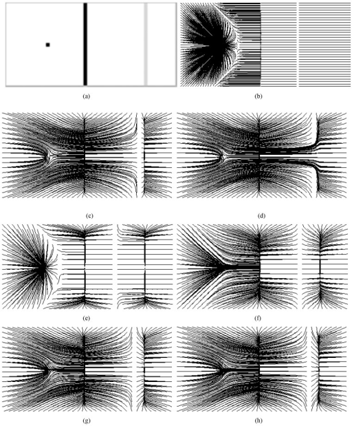 Results on a synthetic image.(a) Synthetic edge map containing an impulse, a strong edge and a weak one; streamlines generated from (b) GVF using μ = 0.2,#iteration = 200, (c) VFC using m1 with , (d) VFC using m1 with , (e) VFC using m2 with , (f) VFC using m2 with ; (g) CONVEF with n = 1.0, h = 20.0, (h) CONVEF with n = 1.0, h = 25.0.