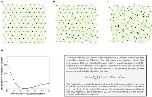 Estimation of the amount of noise in the experimentally observed trichome pattern. (A–C) A hexagon pattern with increasing amount of noise, controlled by the parameter ε (A: ε=0.1, B: ε=0.3, C: ε=0.5). (D) Difference between the local irregularity as measured by the distance between neighbors, the angle between pairs of adjacent neighbors, and the anisotropy of the neighbors distribution of the observed trichome and a noisy hexagonal pattern. The minimum shows that trichomes resemble a hexagonal pattern with a noise level of 0.44. Reproduced with permission from Greese et al. (2012) © The Institution of Engineering and Technology.