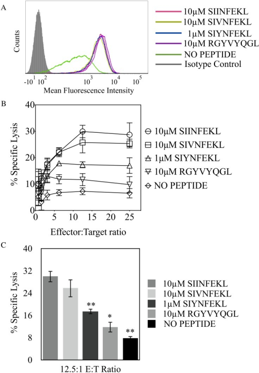 Peptide amino acid substitution demonstrates that auxiliary anchor residue P3 is an important factor in determining Ly49C recognition.(A) Expression of H-2Kb on RMA/S cells co-incubated with the listed peptides (B) Cytotoxic assay using RNK.49W/C effector cells and RMA-S targets incubated with SIINFEKL or the indicated SIINFEKL variants (SIVNFEKL and SIYNFEKL) and RGYVYQGL (C) Statistically significant changes in Ly49W/C recognition of H-2Kb, with respect to the positive control for RNK.49W/C recognition (SIINFEKL-loaded RMA/S cells), were conducted at the 12.5:1 E:T ratio from cytotoxicity assays (*p < 0.05, **p < 0.005). Results plotted are the mean of three independent experiments with error bars indicating SD.