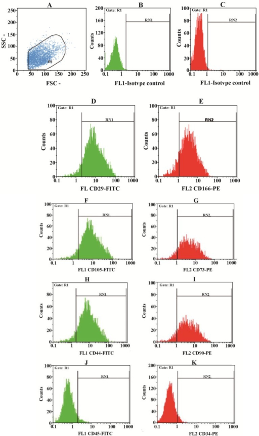 Flow cytometry plot. hAM-MSCs were prepared and their surface markers were assessed by flow cytometry technique. A) hAM-MSC were gated, B-C) isotype controls, D-E) hAM-MSCs were positive for CD29 and CD166, respectively. F-I) hAM-MSCs were also positive for CD105, CD73, CD44 and CD90, respectively. J-K) hAM-MSCs were negative for CD45 and CD34, respectively.