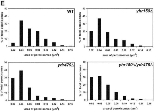 Peroxisomes are smaller, more abundant, and exhibit clustering in cells deleted for either or both of the YHR150w and YDR479c genes. Ultrastructure of wild-type BY4742 (A), yhr150Δ (B), ydr479Δ (C), and yhr150Δ/ydr479Δ (D) cells. Cells were grown in YPD medium overnight, transferred to YPBO medium, and incubated in YPBO medium for 8 h. Cells were fixed and processed for EM. P, peroxisome; P*, peroxisome cluster. Bar, 0.5 μm. (E) Morphometric analysis of peroxisomes of oleic acid–incubated wild-type (WT) BY4742 and deletion mutant cells. For each strain analyzed, electron micrographs of 50 randomly selected cells at a magnification of 17,000 were scanned, and the areas of individual peroxisomes were determined by counting the number of individual pixels in a peroxisome with Image Tools for Windows, Version 2.00. The peroxisomes were then separated into size categories. A histogram was generated for each strain depicting the percentage of total peroxisomes occupied by the peroxisomes of each category. The numbers along the x axis are the maximum sizes of peroxisomes in each category (in μm2).